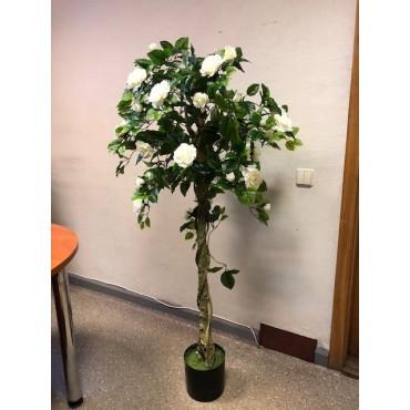 "Medelis ,,Rožė"" (150cm)"