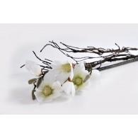 Puokštė medžio šakelė su magnolija.