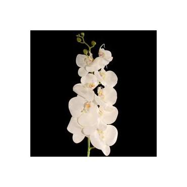 Orchidėja balta